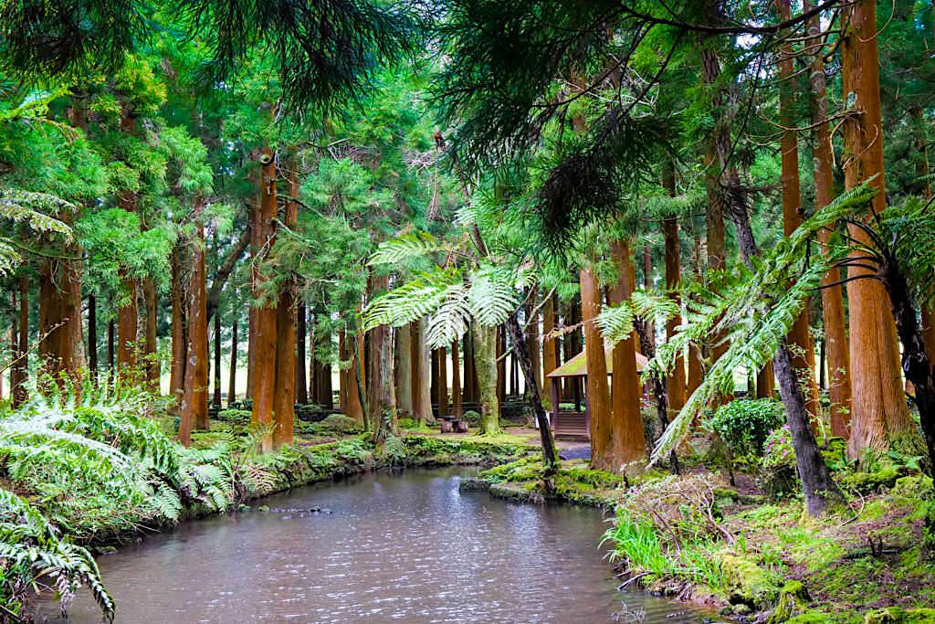 Parque das Sete Fontes - Wunderschöner Wald mit Teichen, Quellen und Brunnen - Sao Jorge, Azoren