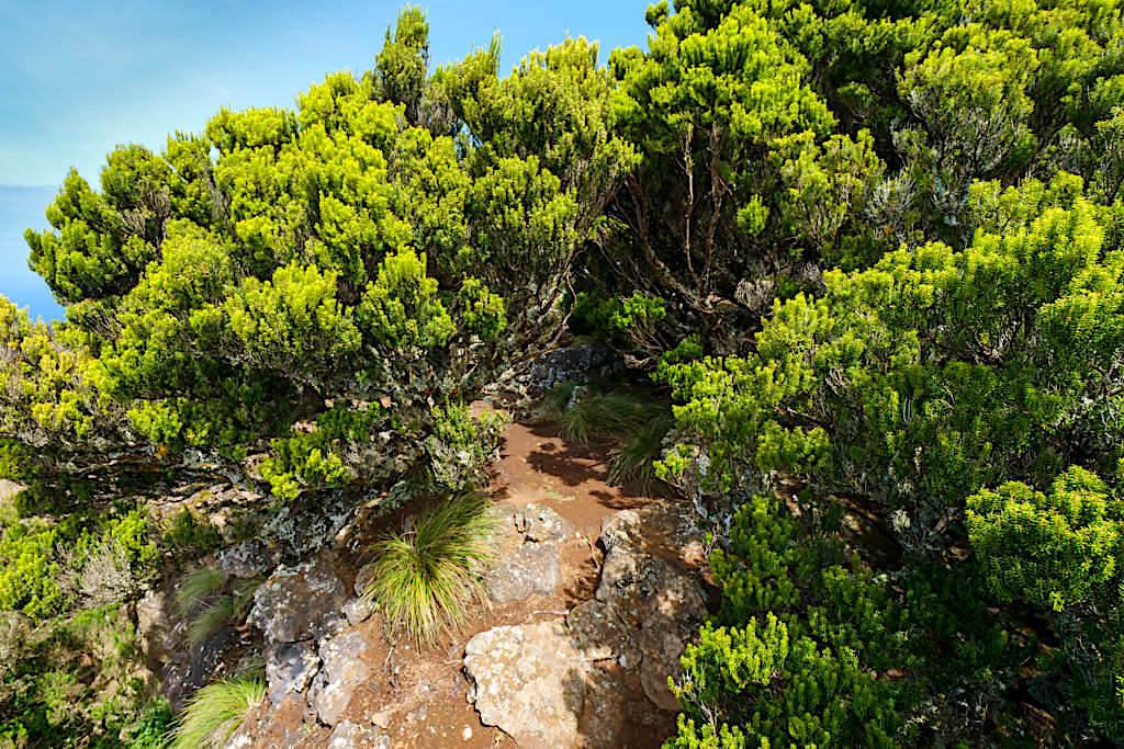 Ponta dos Rosais - Kein Weg, aber ein schmaler Trampelpfad führt zu den Klippen - Sao Jorge, Azoren