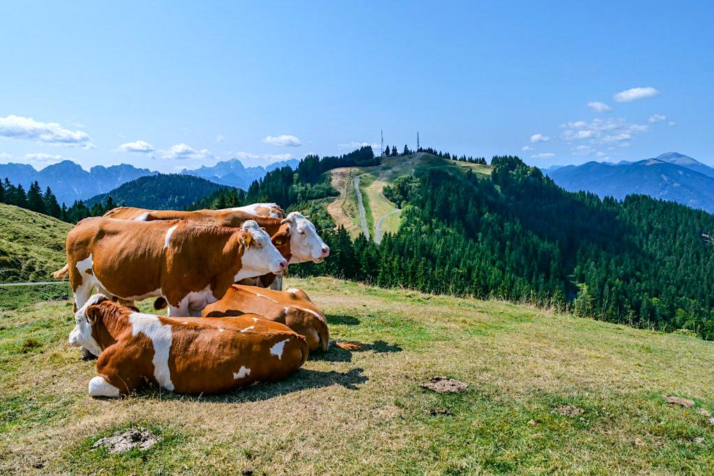 Seltschacher Alm mit Blick auf Dreiländereck Gipfel - Hüttenkult - Kärnten, Österreich