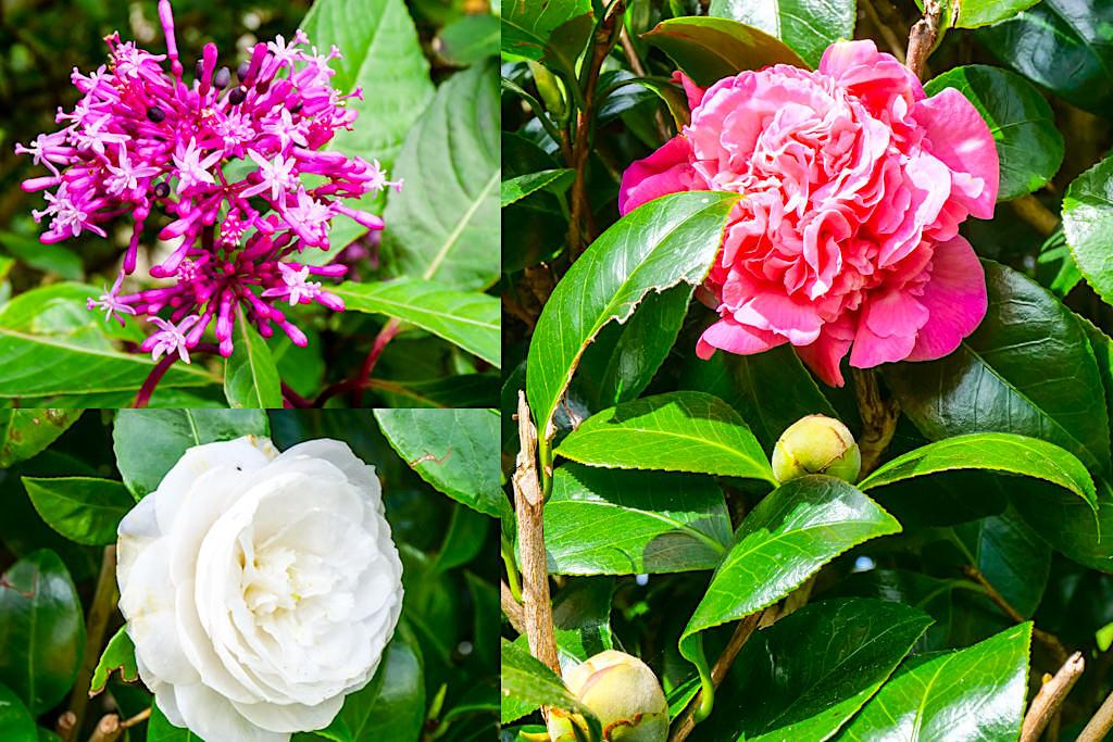 Parkque das Sete Fontes - Eine herrliche Blütenpracht erwartet die Besucher - Sao Jorge, Azoren