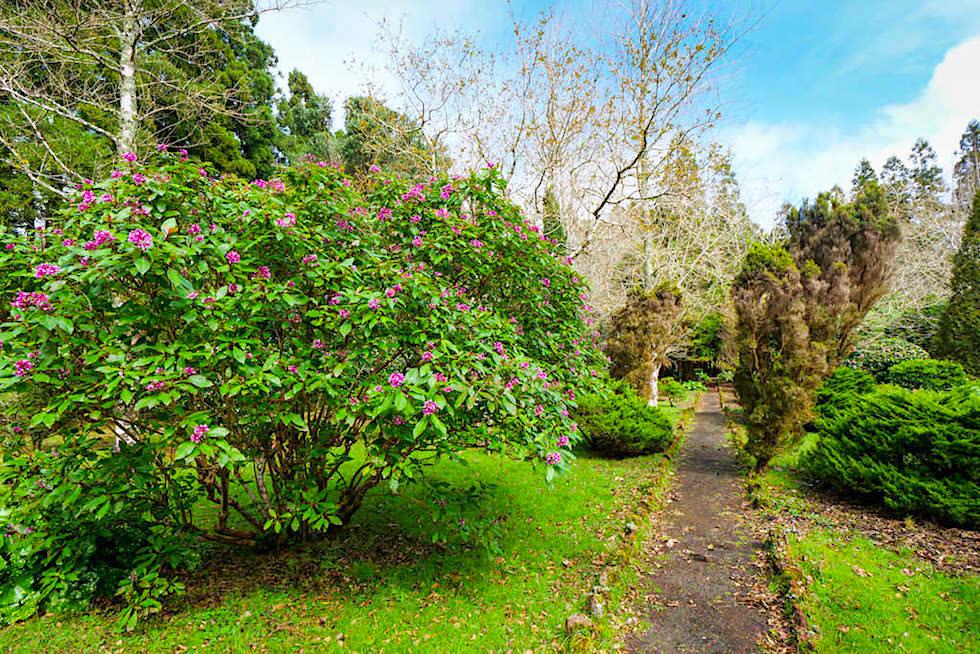 Parque Sete Fontes - Schön angelegter Pflanzenlehrpfad erklärt endemische Pflanzen - Sao Jorge, Azoren