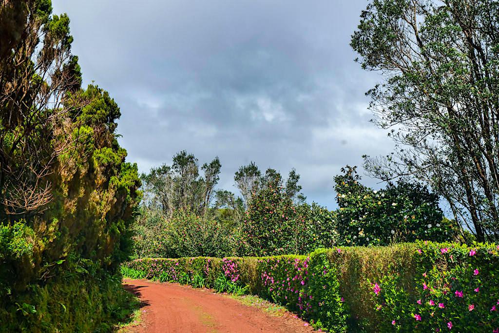 Parque das Sete Fontes - Weg zum Miradouro do Pico da Velha - Sao Jorge, Azoren