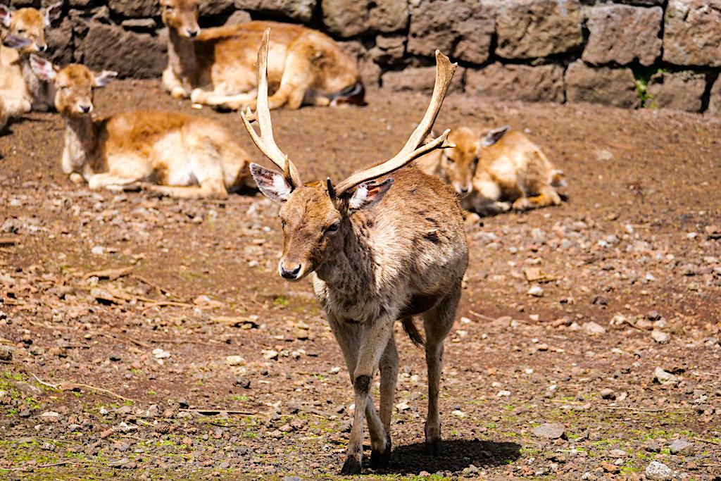 Parque das Sete Fontes - Naherholungsgebiet im Westen: Wildgehege mit Wald und exotischen Pflanzen - Sao Jorge, Azoren