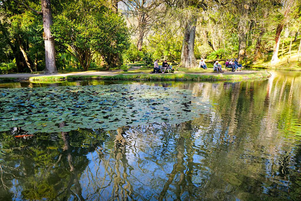 Terra Nostra Park in Furnas bietet seinen Besuchern ein immense Baum- & Pflanzenvielfalt aus vielen Ländern der Erde - Sao Miguel, Azoren