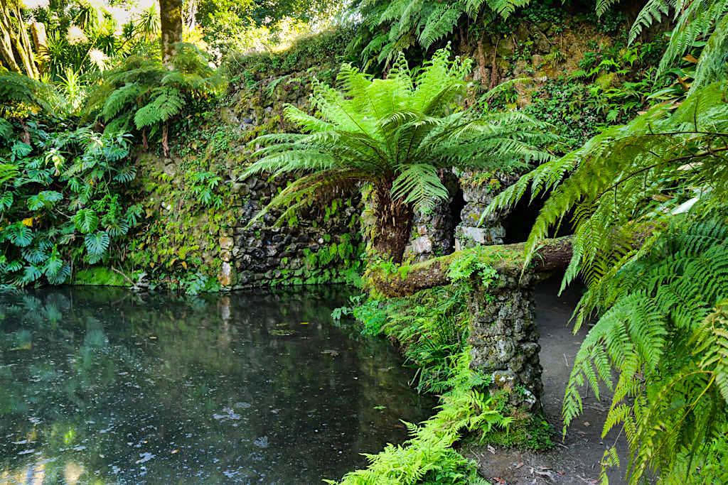 Terra Nostra Park in Furnas: die schönste Parkanlage auf den Azoren - Beeindruckende Farne, 600 verschiedene Kamelienarten & eine riesige Pflanzenvielfalt - Sao Miguel