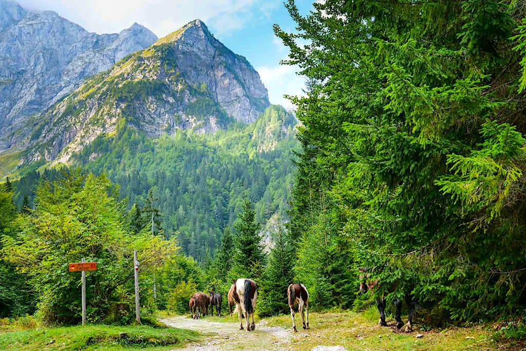 Wanderung zur Zacchi Hütte auf dem Forstweg von den Laghi di Fusine ausgehend - Tarvisio, Italien