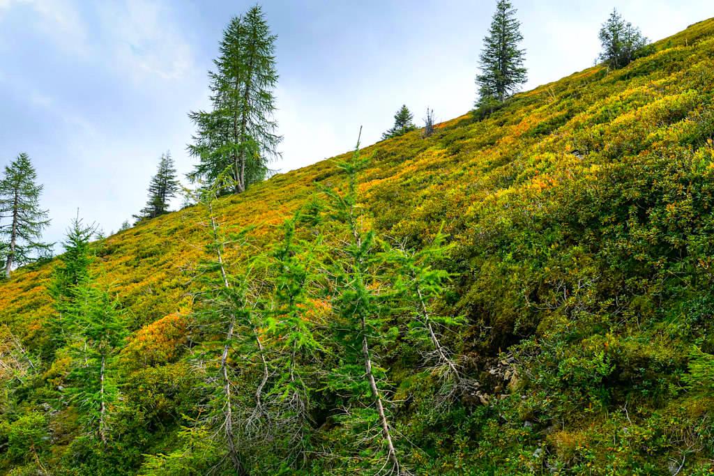 Wöllaner Nock - Rundwanderung im Herbst - Kärnten, Österreich