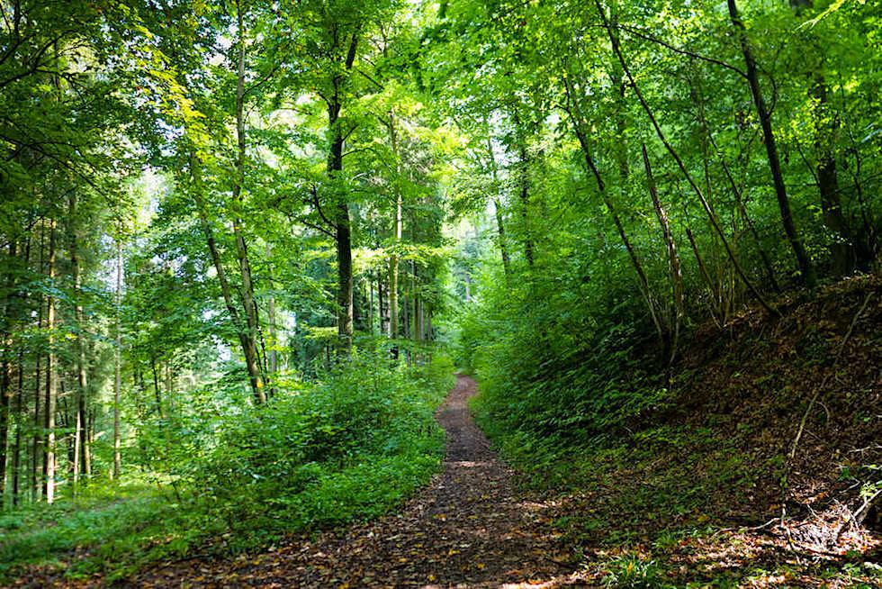 Altmühltal Klamm Wanderung - Schattiger, einfacher Waldweg - Von Riedenburg nach Prunn - Bayern