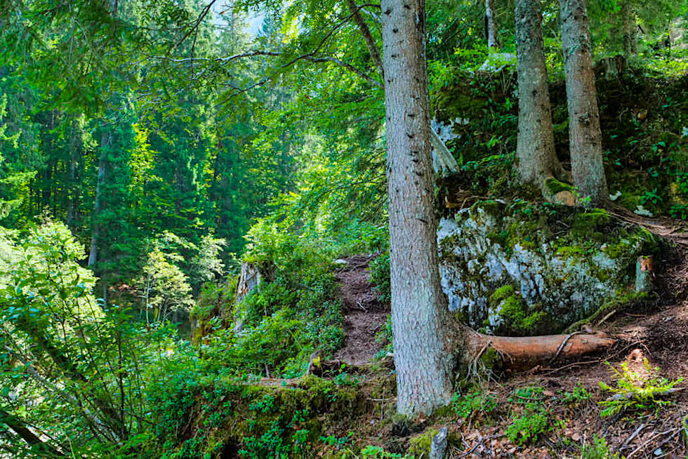 Laghi di Fusine - Waldspaziergang am See - Tarvisio, Italien