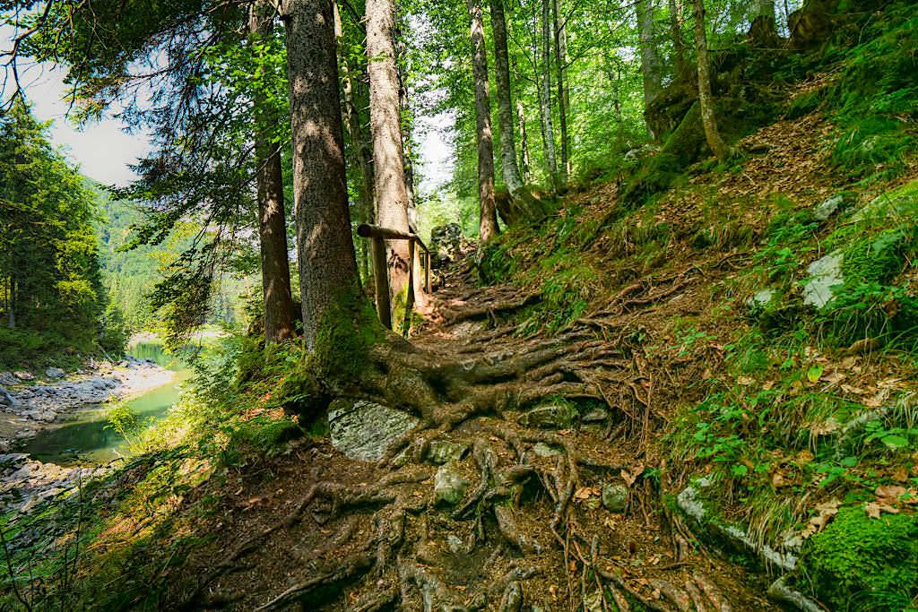 Laghi di Fusine - Schön angelegte Waldwege verbinden den Oberen und Unteren Weißenfelser See - Tarvisio, Italien
