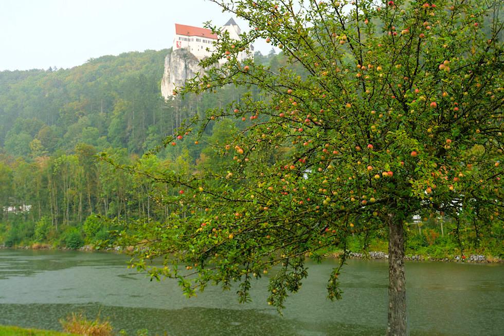 Ausblick auf das wunderschöne Schloss Prunn, Apfelbaum & Main-Donau-Kanal bei Einthal - Altmühltal, Bayern