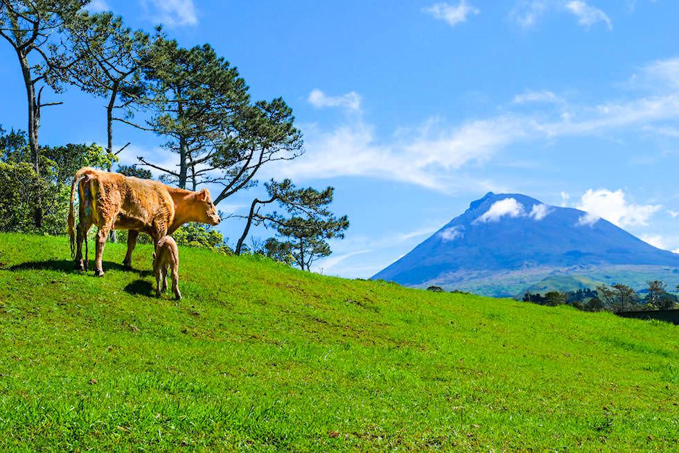 Anfahrt von Criação Velha zur Gruta das Torres über Weiden, Farmland und Ausblick auf den Pico Alto - Pico, Azoren