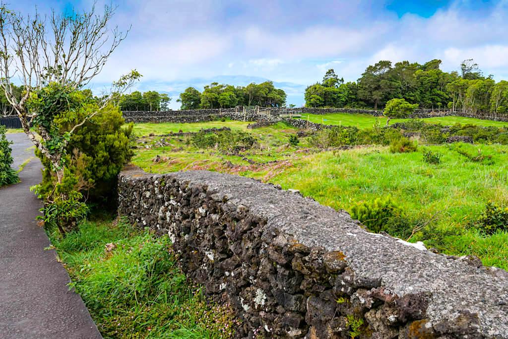 Gruta das Torres - Umgebung voller Lavatunnel: eine Schweizer-Käse-Formation - Pico, Azoren