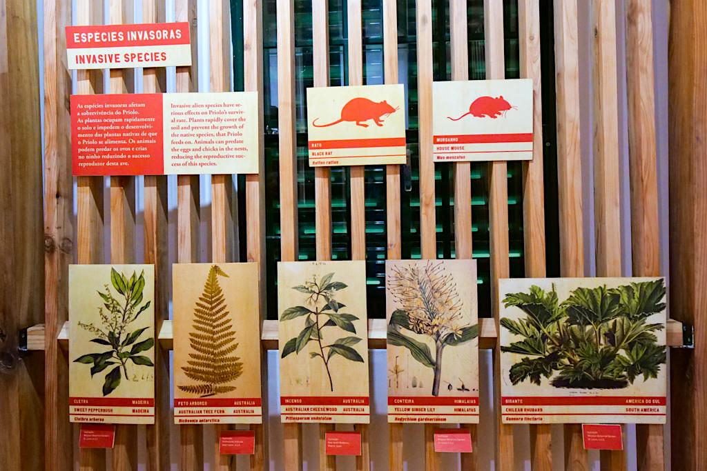 Centro Ambiental do Priolo klärt über gefährliche, invasive Pflanzen auf, die den Lebensraum Lorbeerwald, Moore & Azorengimpel bedrohen - Nordeste, Sao Miguel - Azoren