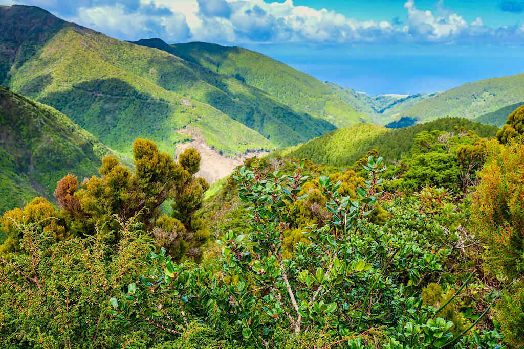 Land of Priolo - ein außergewöhnliches, erfolgreiches Vorzeige-Naturschutzprojekt im Osten von Sao Miguel - Azoren