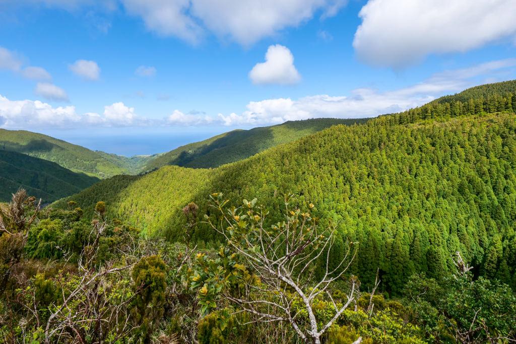 Land of Priolo - Großes Naturschutzprojekt rund um die Serra da Tronqueira & Planalto dos Graminhais - Nordeste, im Osten von Sao Miguel - Azoren