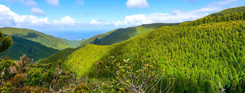 Lands of Priolo – Ein Vorzeige-Naturschutzprojekt auf São Miguel das bewegt!