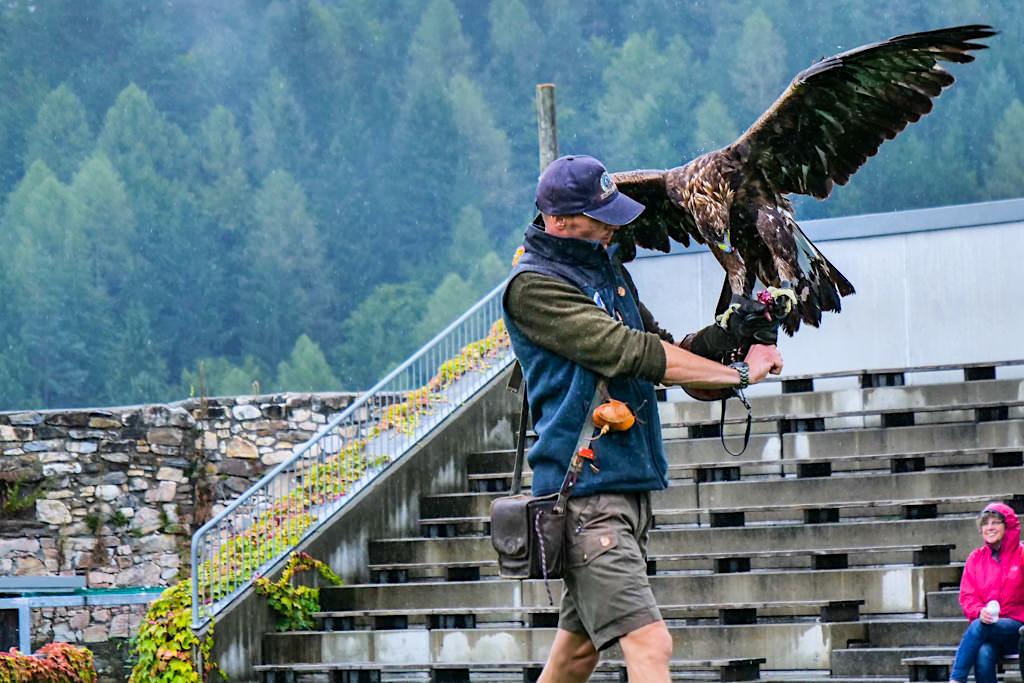 Adlerarena & Greifvogelpark Landskron - Steinadler mit Falkner - Kärnten, Österreich