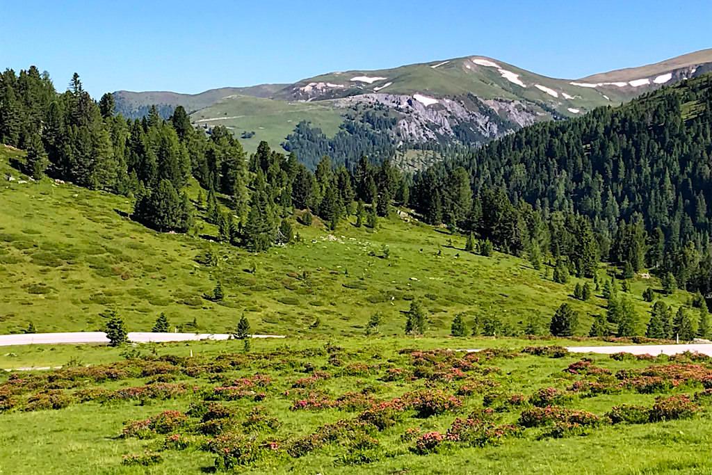 Pinker Almrausch, Alpenrose, grüne Almwiesen & sanft runde Nockberge - Bezaubernd schöne Kulisse der Nockalmstraße - Kärnten, Österreich