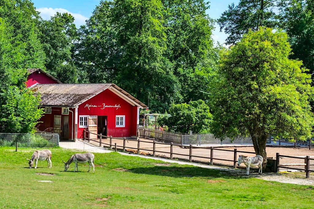 Mainau Bauernhof mit Streichelzoo und Ponyreiten - Kinderparadies Mainau - Baden-Württemberg