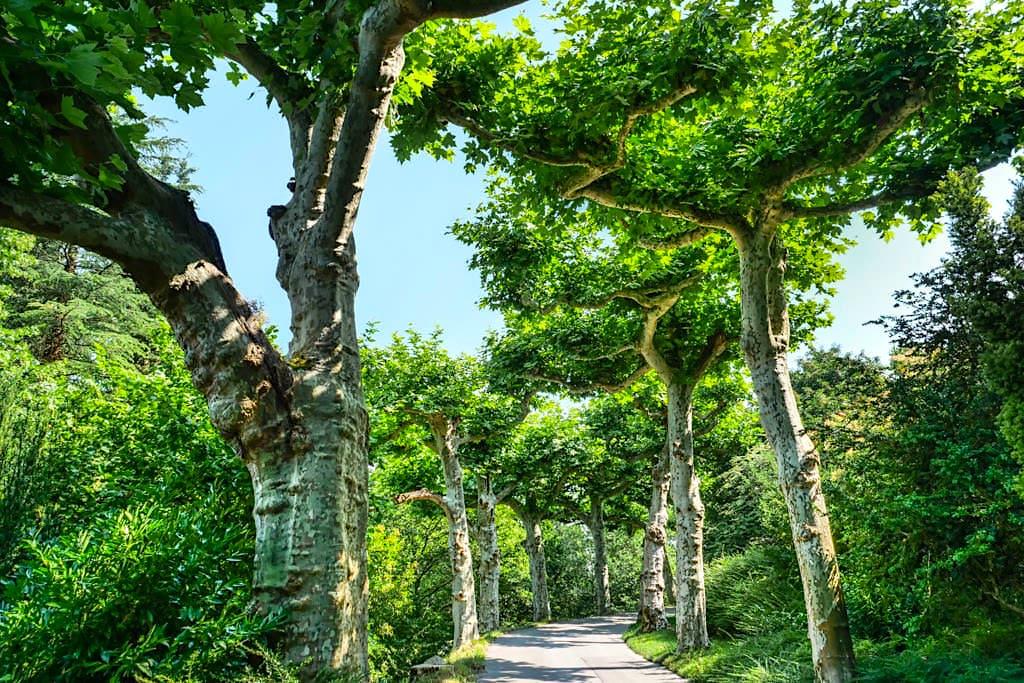 Welt der Bäume: Insel Mainau - Herrliche, schattige Baumalleen - Baden-Württemberg