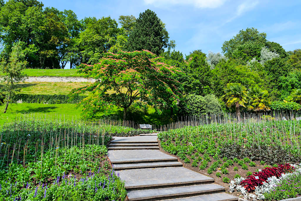 Insel Mainau - Dahliengarten im Sommer lässt die Blütenpracht im Herbst nur erahnen- Baden-Württemberg
