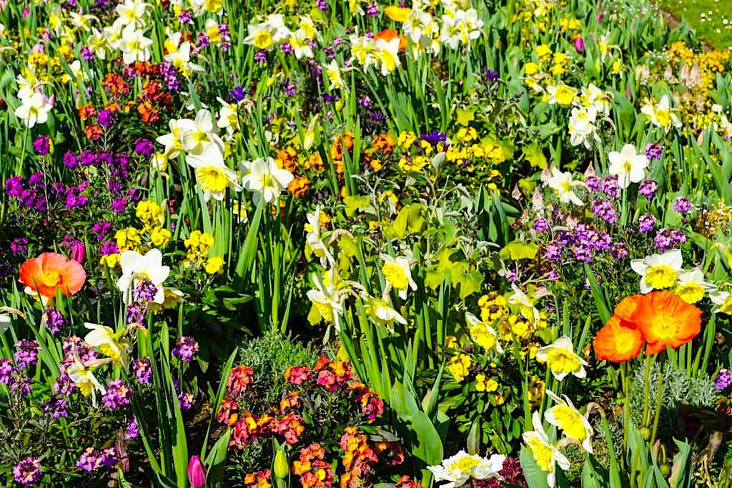 Mainau im Frühling - Bunte Blumenwiesen sind die ersten Blumengrüße - Baden-Württemberg
