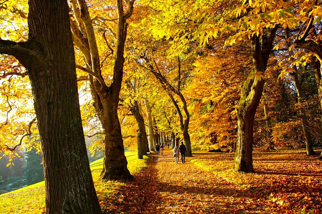 Insel Mainau im Herbst - Laubbaum Alleen in Herbstfarben - Baden-Württemberg