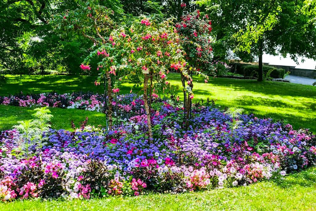 Mainau im Sommer - Farbenfrohe Blumenbeete begeistern überall auf der Blumeninsel - Baden-Württemberg