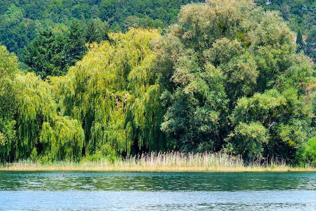 Seefelder Aach Naturschutz - Panorama-Bodensee-Schiffsfahrt auf dem Überlinger See - Baden-Württemberg