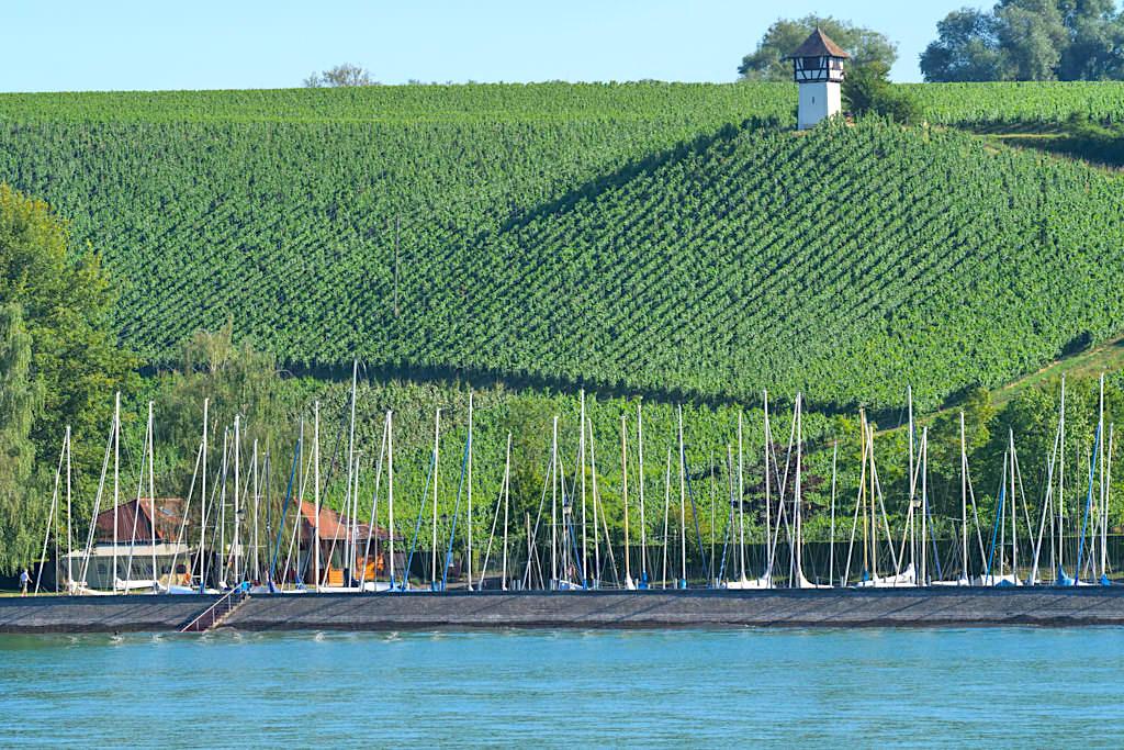 Weinberge bei Meersburg - Große Dreiländer-Rundfahrt auf dem Bodensee - Baden-Württemberg