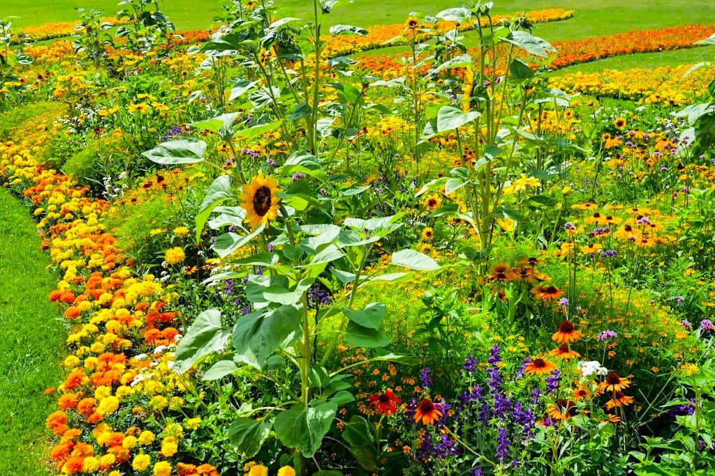 Das Blumenparadies Insel Mainau im Bodensee erblüht von Frühling bis Spätherbst in faszinierenden Blumenmeeren - Baden-Württemberg