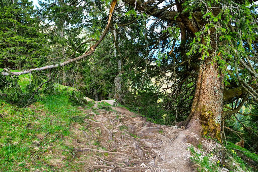 Vom Heimgarten-Gipfel Abstieg nach Walchensee - Bayern