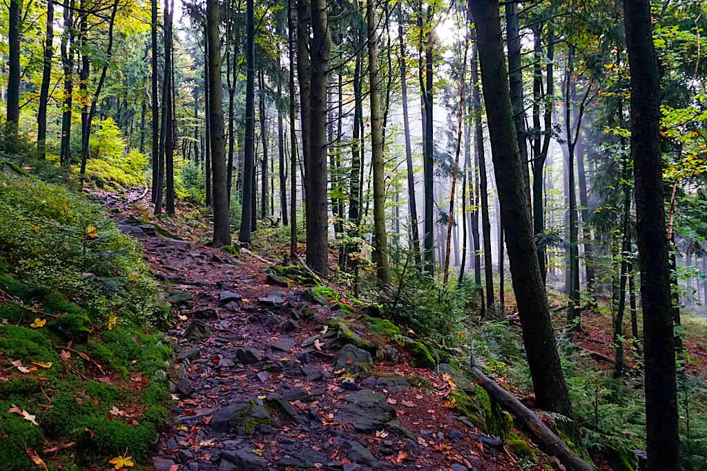 Herzogstand Aufstieg durch den Wald - Bayern