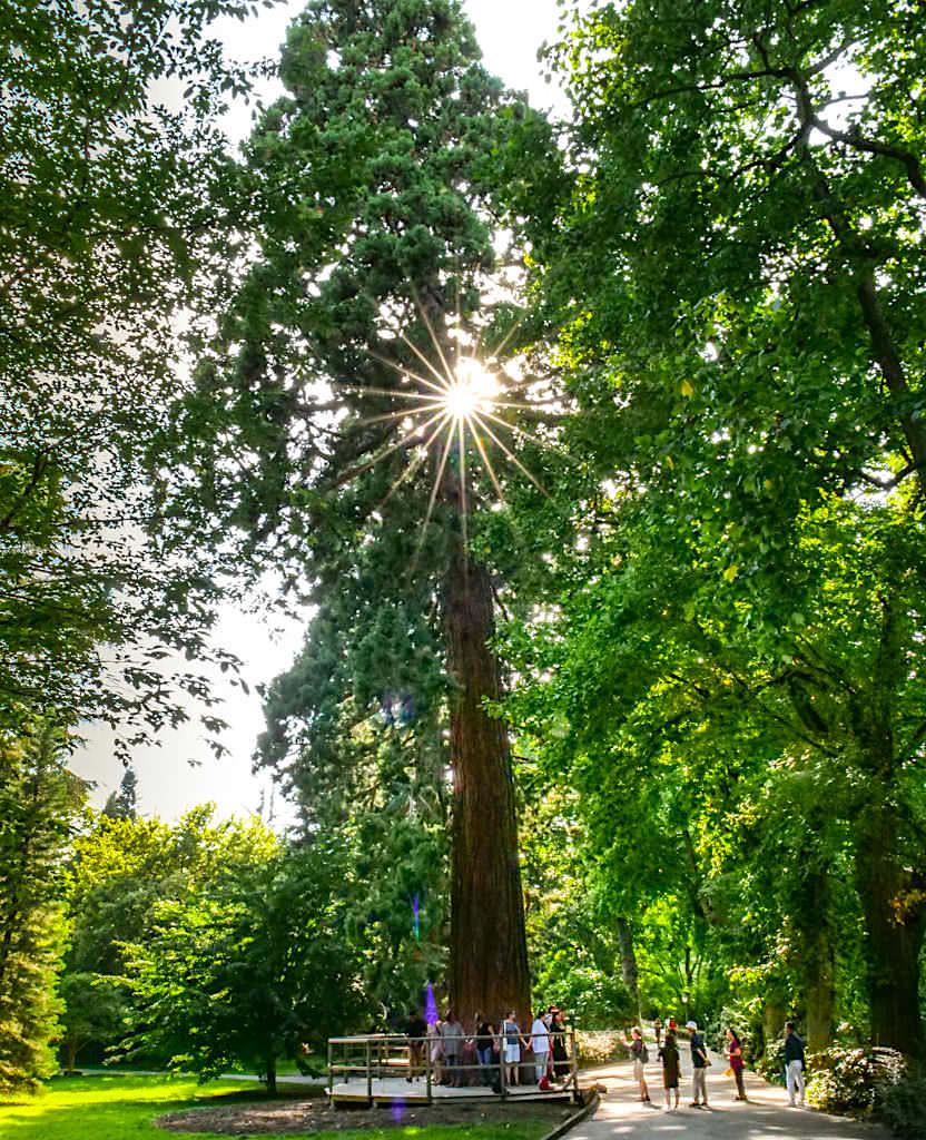 Insel Mainau - Gigantische Mammutbäume im Arboretum zeigen wie mächtig die Natur und wie klein der Mensch doch ist - Baden-Württemberg