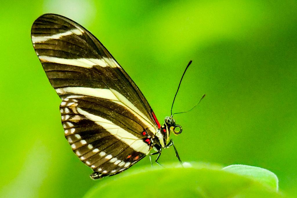 Beeindruckendes Schmetterlingshaus der Insel Mainau - zweitgrößtes Schmetterlingshaus in Deutschland - Baden-Württemberg