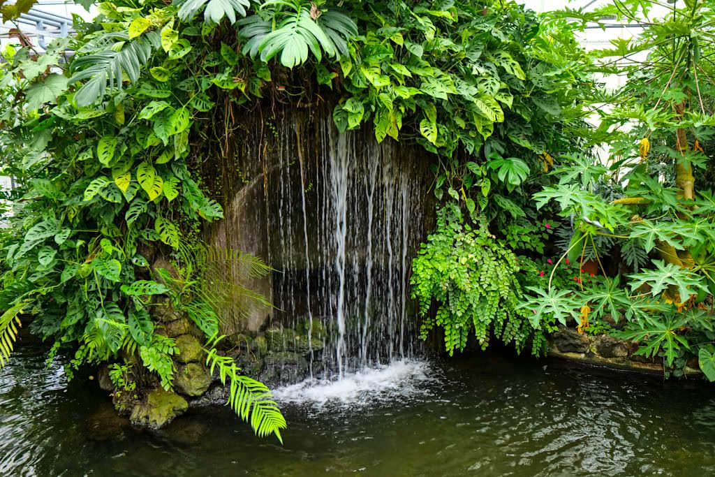 Schmetterlingshaus der Insel Mainau - Wasservorhang, Teiche & Nebelanlagen sorgen für die hohe Luftfeuchtigkeit - Baden-Württemberg