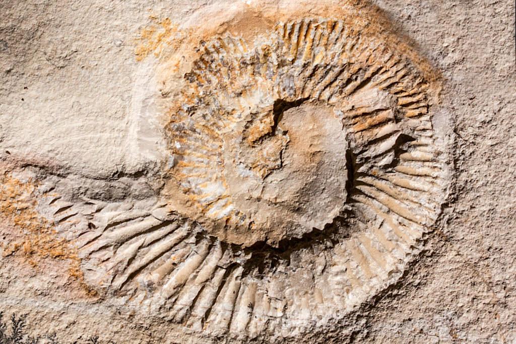 Solnhofer Plattenkalk - Berühmt durch seine 150 Millionen Jahre alten Fossilien-Einschlüsse - Altmühltal Attraktionen - Bayern
