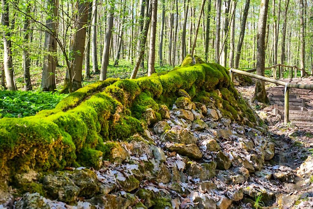 Naturwunder Steinerne Rinne - Hier baut sich das Wasser einen bis zu 1,60 m hohen Kalktuff-Damm - Altmühltal Sehenswürdigkeiten - Bayern