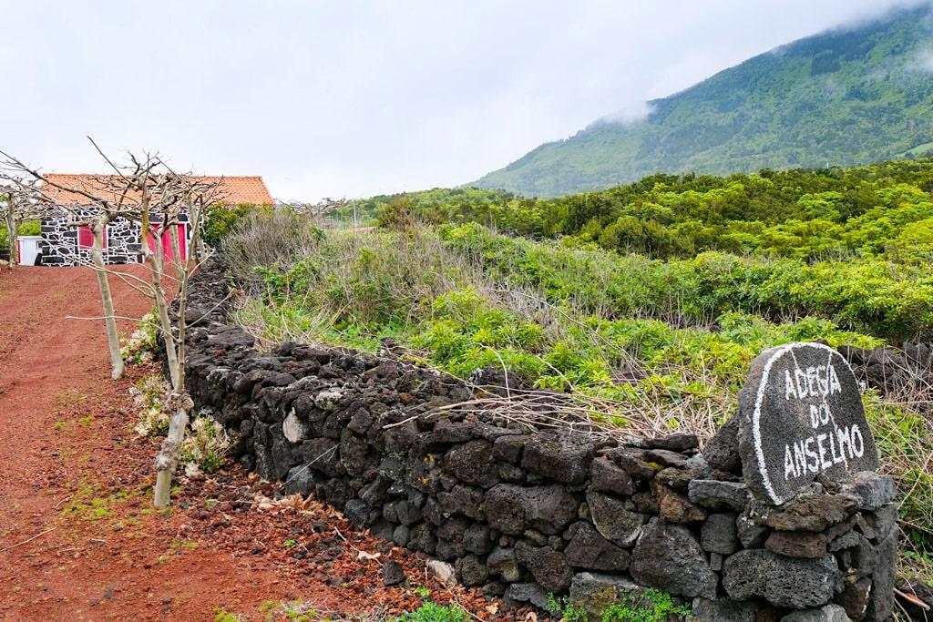 Adega do Anselmo - Porto da Prainha - Insel Pico, Azoren