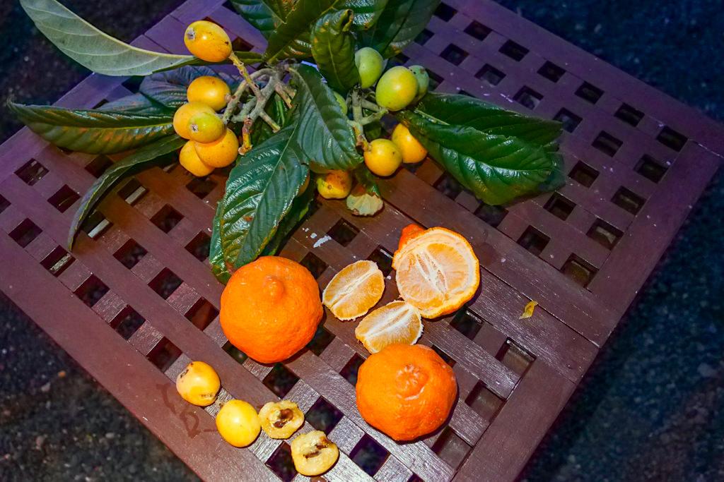 Früchte der Azoreninsel Pico - Tangerinen & Nesperas