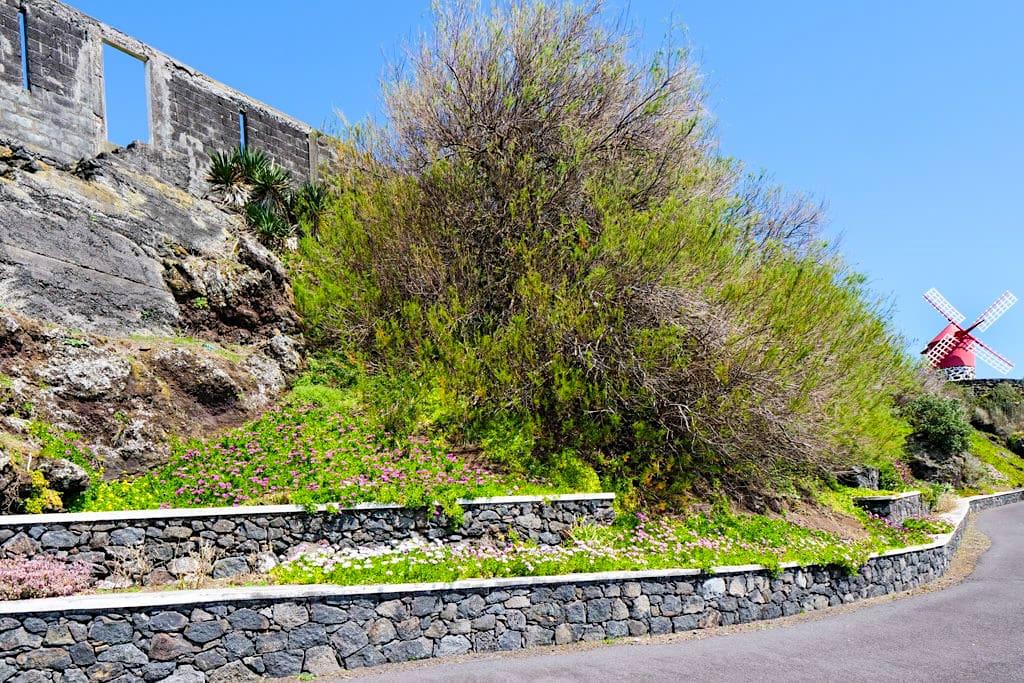 Typische Windmühlen Moinho do Mourricao - Calheta des Nesquim - Insel Pico, Azoren