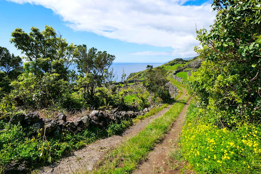 PR11PIC - Schöne Wanderung rund um Calheta de Nesquim mit tollen Ausblicken - Insel Pico -Azoren