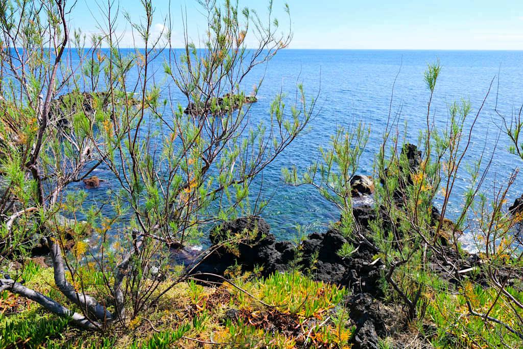 Wanderung beim Ponta da Ilha mit Meerblick - Insel Pico - Azoren