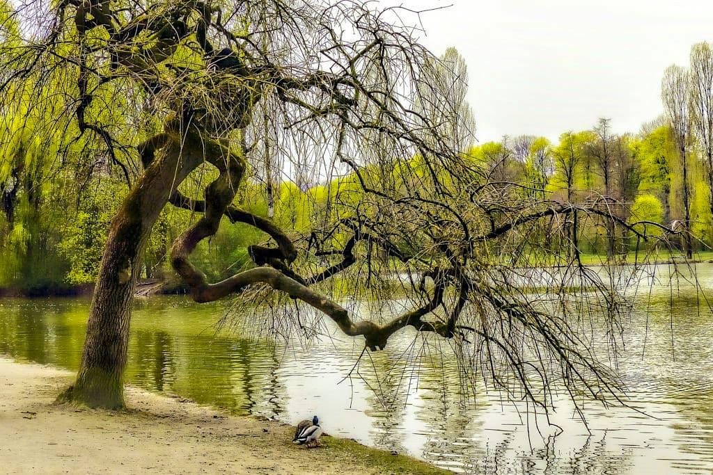 Englischer Garten beim Erblühen im Frühling - München Attraktionen - Bayern