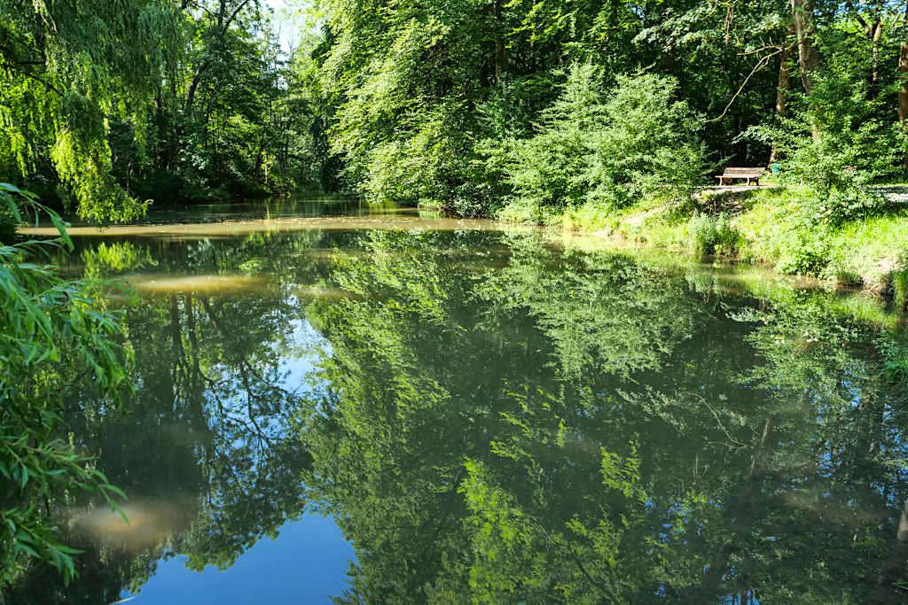 Englischer Garten Nordteil - Idyllisch gelegener Entenfallweiher in der Nähe des Aumeister Biergartens - München, Bayern