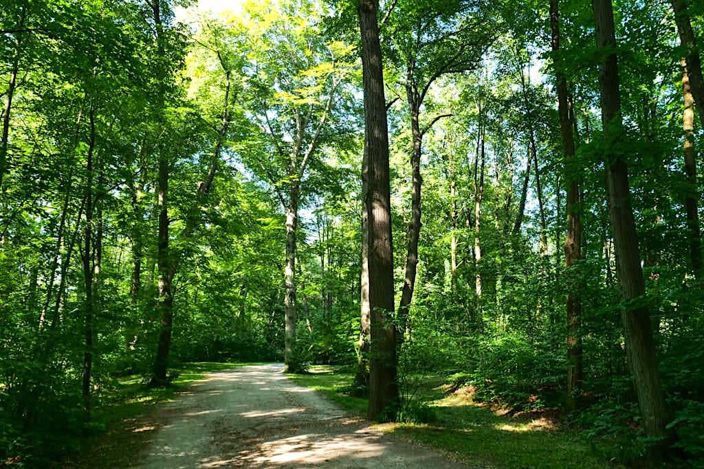 Herrliche einsame, schattige Waldwege - Englischer Garten Nordteil - München, Bayern