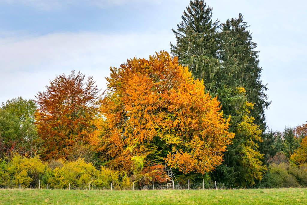 Aschering im Herbst - Wanderung vom Starnberger See über den Maisinger See zum Ammersee - Bayern
