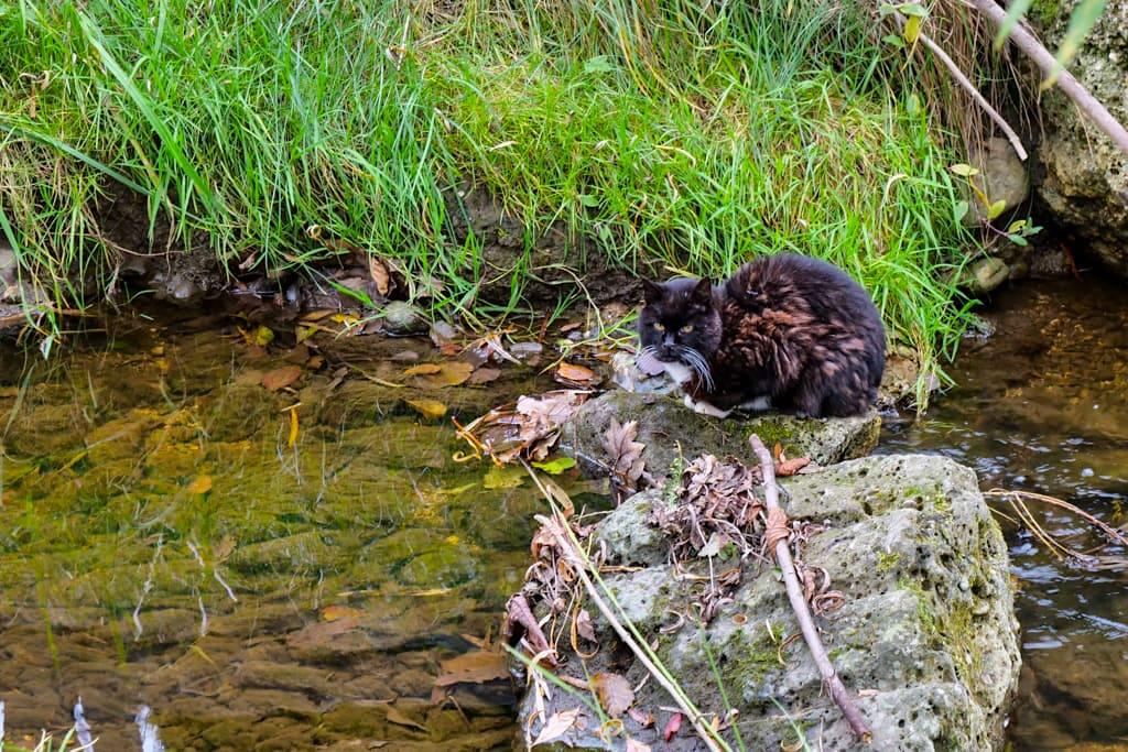 Die Katze lässt das Fischen nicht -Ascheringer Bach wird später zum Maisinger Bach - Bayern