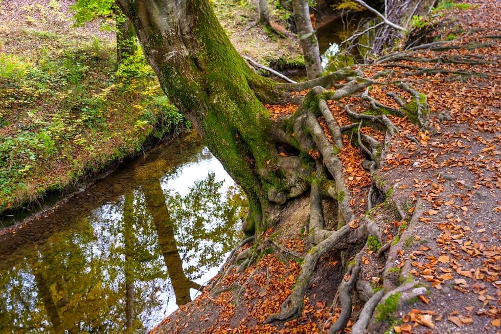 Wanderung entlang dem Fallbach am Maisinger See - Waldidylle pur - Bayern